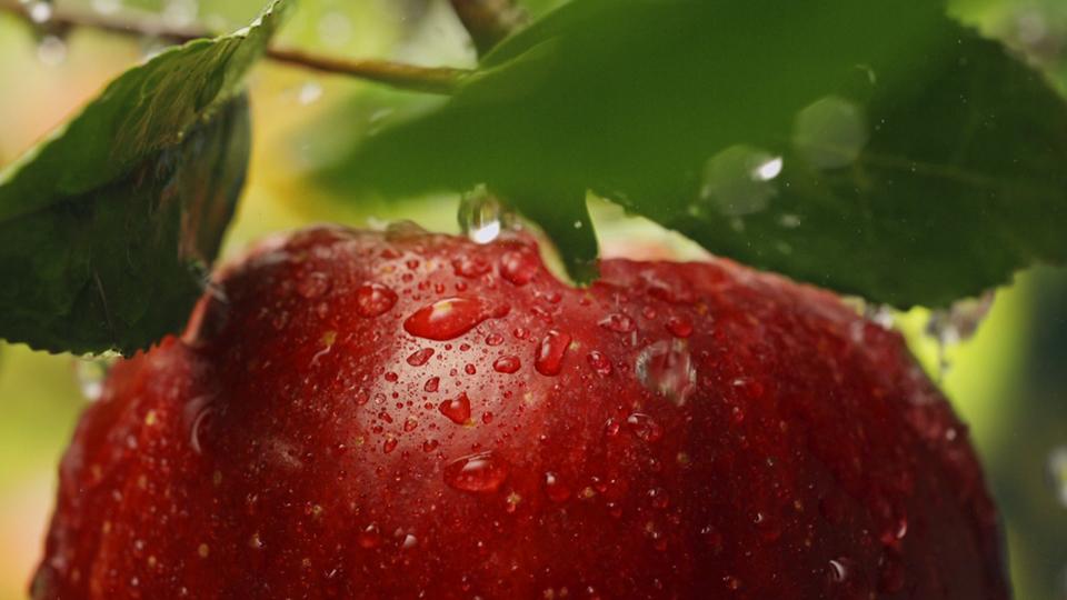 Juhayna – Pure Fruits